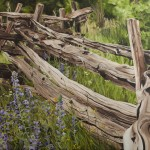 """Split Rail Fence"" Brenda Stonehouse 18"" x 24"" oil on canvas. Limited edition prints available."