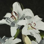 """White Lilies"" Brenda Stonehouse 18"" x 24"" oil on canvas. Private collection."